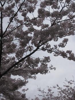 花見4.jpg