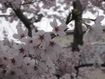 花見3.jpg